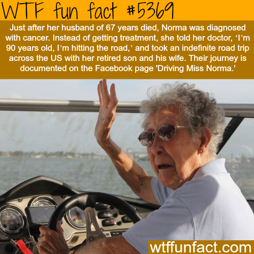 Driving Miss Norma - WTF fun facts