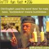 dumbledore bumblebee