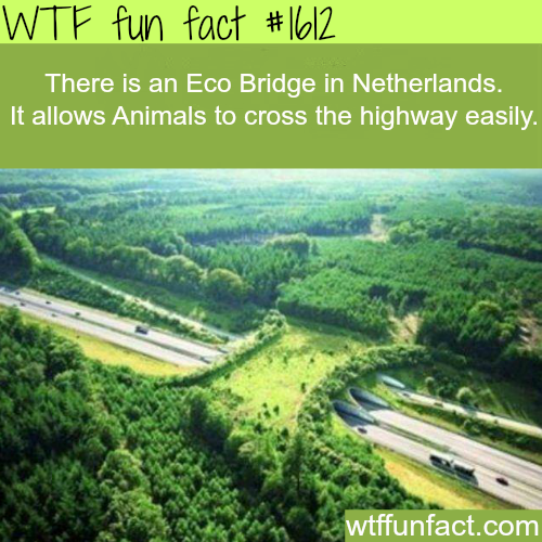 Eco bridge in the Netherlands - WTF fun facts