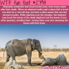 elephants the most emotional animales in the world