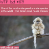 endangerd primate species