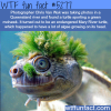 endangered mary river turtle wtf fun facts