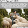 estonias e government wtf fun facts