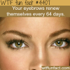 eyebrows facts wtf fun facts