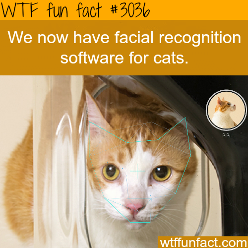 Facial recognition software for cats -  WTF fun facts