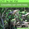 facts about crocodiles you should know