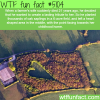 farmer creates a tribute to his late wife wtf