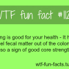 farting facts fart