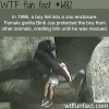 female gorilla saves a little boy wtf fun facts