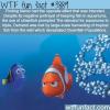 finding nemo devastated the clownfish population
