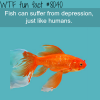 fish can suffer depression wtf fun fact
