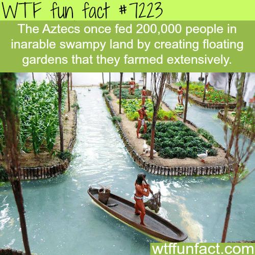 Floating Gardens - WTF Fun Fact