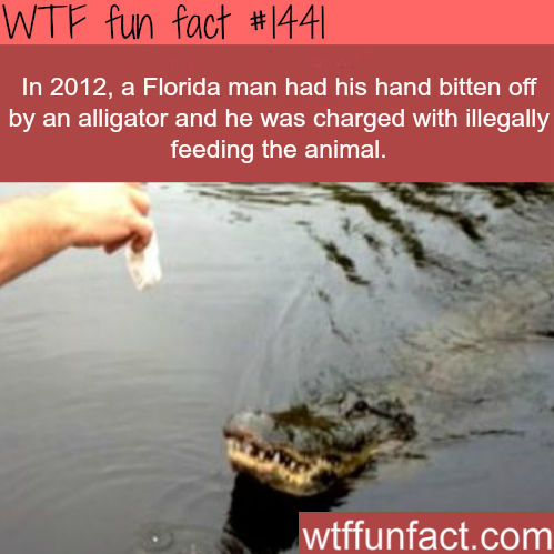 Florida man gets bitten by an alligator.
