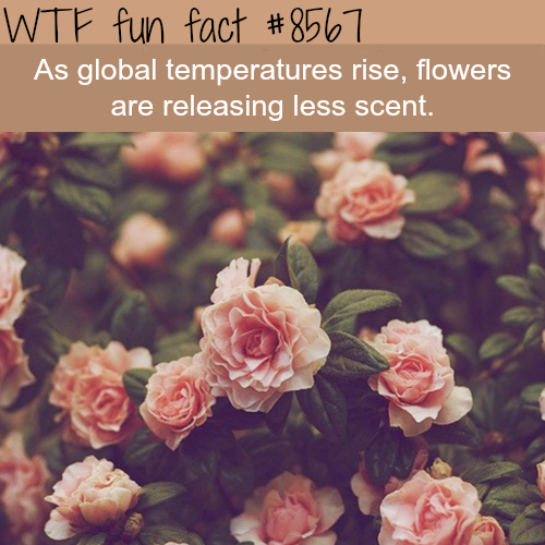 Flowers are releasing less scent - WTF fun facts