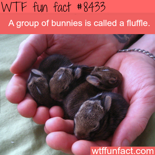 Fluffle - WTF fun facts