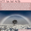 fogbows wtf fun fact