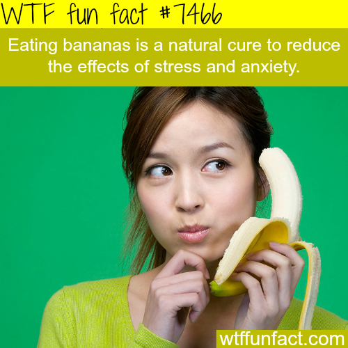 Foods that are known to reduce stress - FACTS