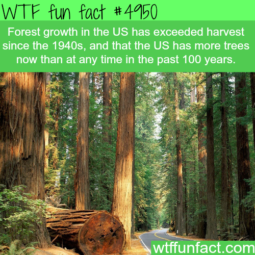 Forest growth in the USA - WTF fun facts
