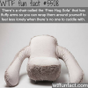 free hug sofa wtf fun facts