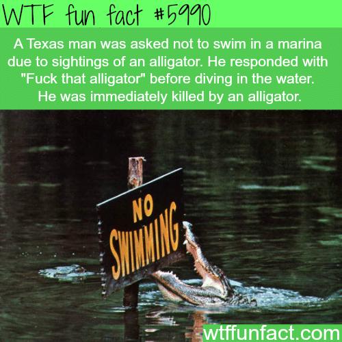 Fuck the alligator - WTF fun facts