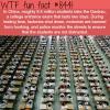 gaokao wtf fun facts