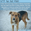 getting kidney for your dog wtf fun fact