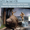 giant beavers the size of black bears wtf fun