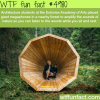 giant megaphones that amplify the sounds of forest