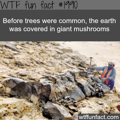 Giant Mushrooms - WTF fun facts