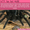 giant tarantulas keep tiny frogs as pets wtf fun