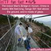 glass bridge in china wtf fun facts