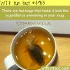 goldfish tea bags wtf fun facts