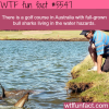golf course in australia with sharks wtf fun