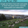 google and yahoo have both used goats to mow the