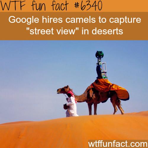Google uses camels to capture the desert - WTF fun facts