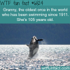 granny the oldest orca in the world wtf fun
