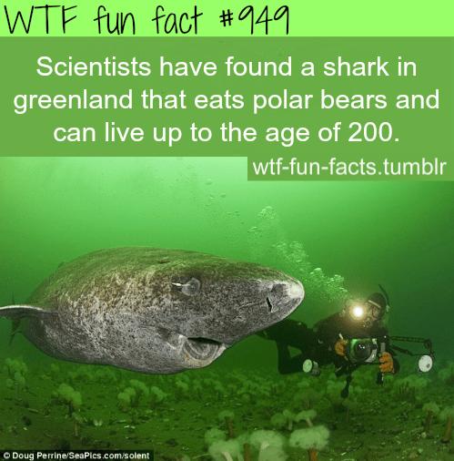 shark in *Greenland.