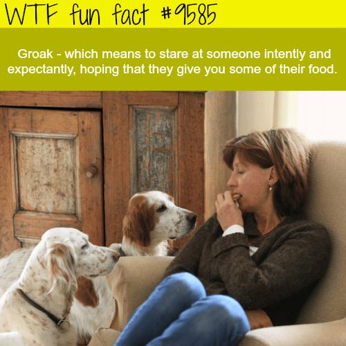 Groak - WTF fun fact