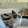 grumpy cat is a millionaire wtf fun facts