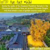 gu guanyin buddhist temple wtf fun facts