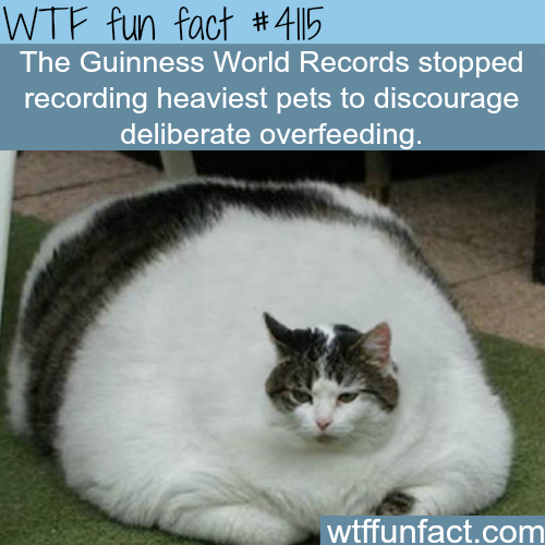 Guinness World Records: Heaviest pets -  WTF fun facts