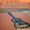 guitar shaped forest in argentina wtf fun facts