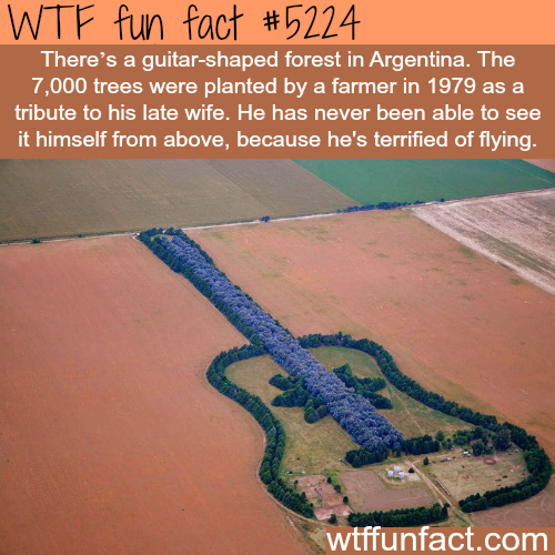 Guitar-shaped forest in Argentina - WTF fun facts