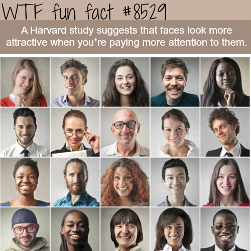 Harvard study says faces look better when we pay attention to them - WTF fun facts