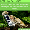 hedgefund managers vs monkeys wtf fun facts