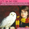 hedwig harry potters owl