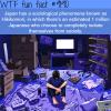 hikikomori wtf fun facts