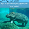hippos can sleep underwater wtf fun facts