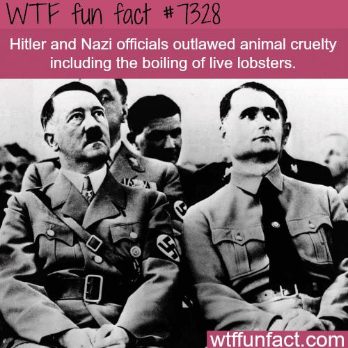 Hitler outlawed animal cruelty - WTF fun fact
