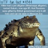 hitlers pet alligator wtf fun facts